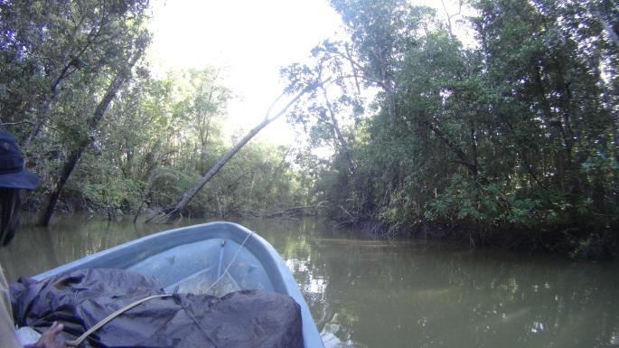 Memasuki jalur hutan rawa bakau